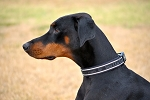 Hurtta Padded Dog Collar  - Black