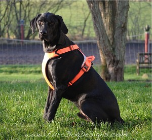 Hurtta Dazzle Dog Harness - Orange and Yellow