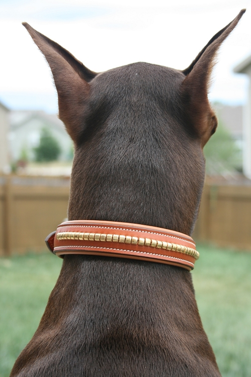 Brass Clincher Dog Collar