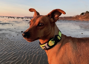 Hurtta Dazzle Dog Collar