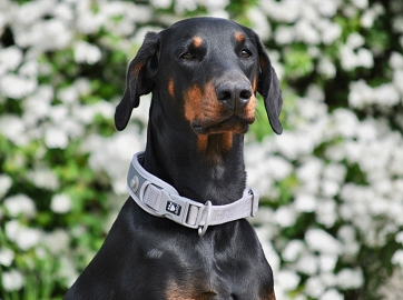 Hurtta Adventure Dog  Collar