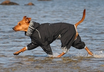 Comparing Dog Raincoats