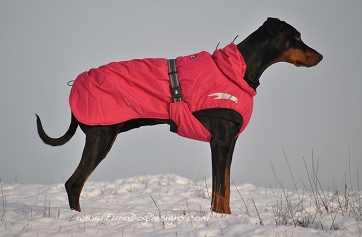 Comparing Winter Dog Coats