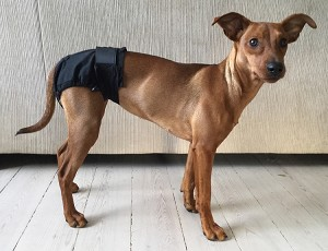 Equafleece Dog Shorts - hygienic briefs for dogs in season