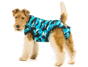 Body suit for dogs recovering from surgery in blue