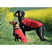 Cotton T-shirt for dogs