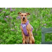Purple padded dog harness from Hurtta